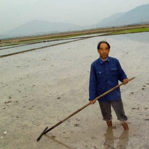 Risbonde på Hainan, Kina Foto: Kjell Fredriksson